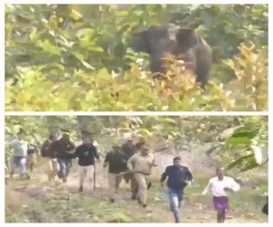 पत्थरों के बीच फंसा हाथी का बच्चा तो मां के उत्पात से दहल गया जंगल, जानें फिर क्या हुआ