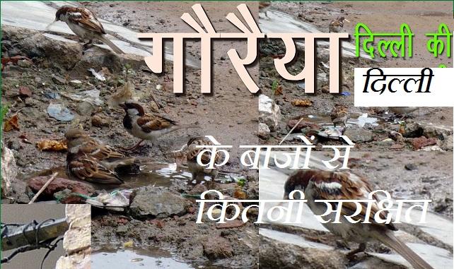gauraiyaa delhi