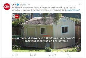 मधुमक्खियों ने मकान पर किया 'कब्जा', पकड़ने से पहले ही गायब हो गईं