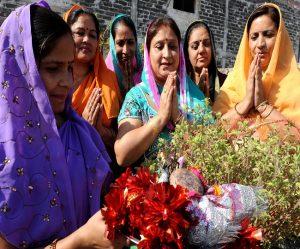 आज तुलसी के पौधे को नष्ट किया तो नरक के भागी बनेंगे, पूजा की तो खुशहाली और धनसंपदा हासिल होगी