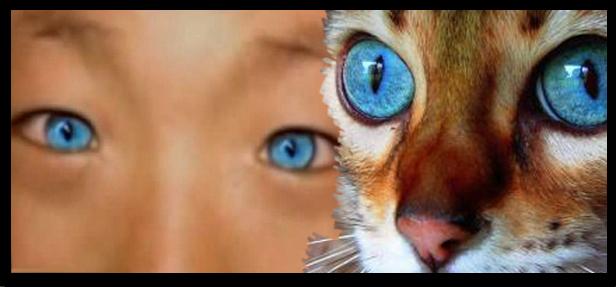menino-gato