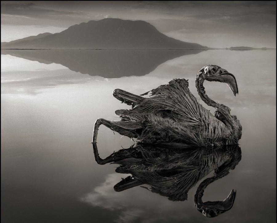 lake222