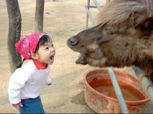 sahibsingh90__yell_animal