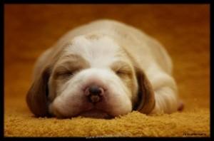 cute-puppies-6