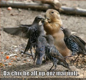 funny-pictures-nuts-birds