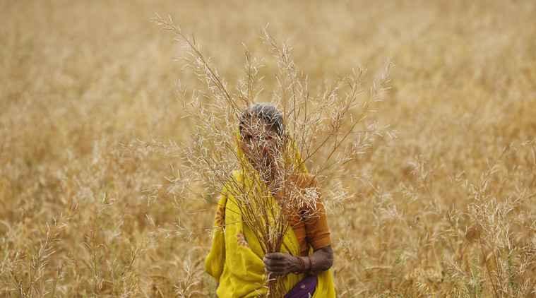 farmer-woman-l