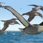 5 करोड़ साल पहले जीवित था दुनिया का सबसे बड़ा पक्षी, स्टडी में खुलासा 6 मीटर तक फैलते थे पंख