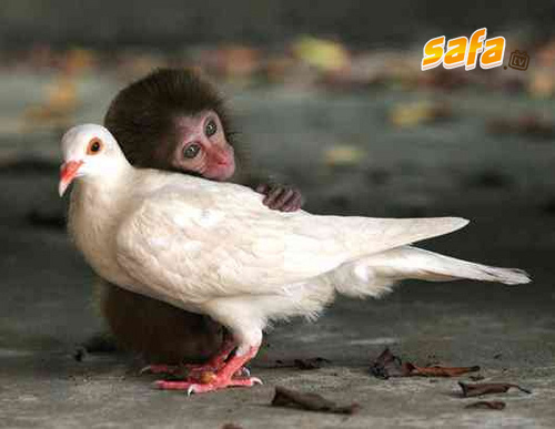 1264496536_animals-love-between-different-species-you-will-be-moved