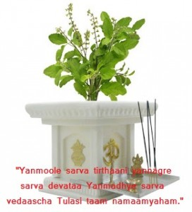 yuccabe-italia-tulsi-planter-yuccabe-italia-tulsi-planter-1plywn