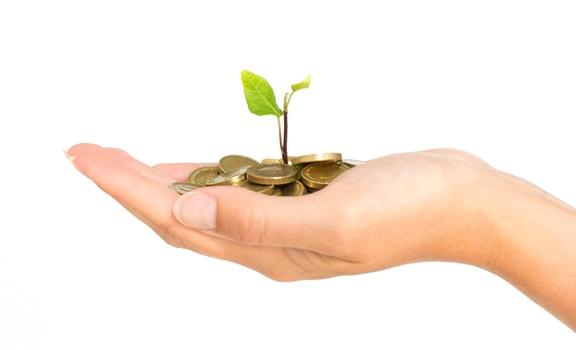 money plant 1