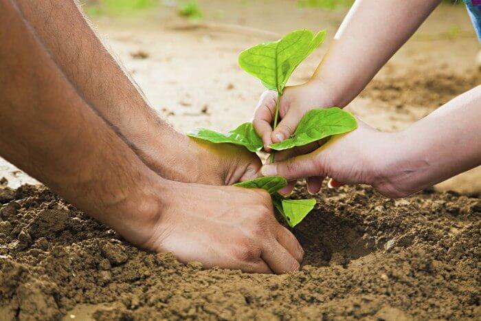 Plant-tree_
