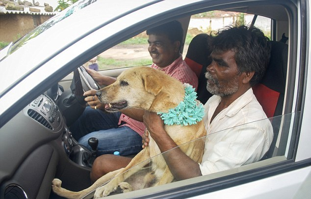 girl and stray dog marriage
