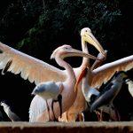 विश्व पशु दिवस : इन पांच लोगों ने पशुओं के नाम कर दिया अपना जीवन, इनके जज्बे को देख दंग रह जाएंगे आप